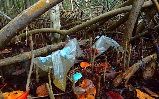 mangroves-trash1